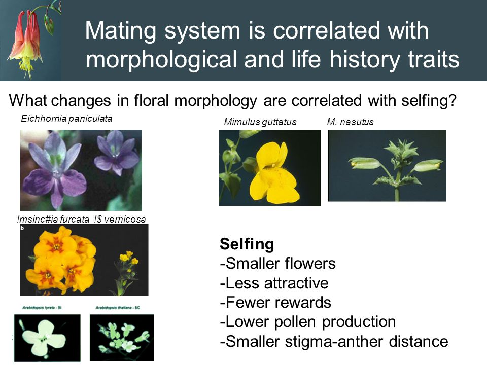 Mating system is correlated with morphological and life history traits