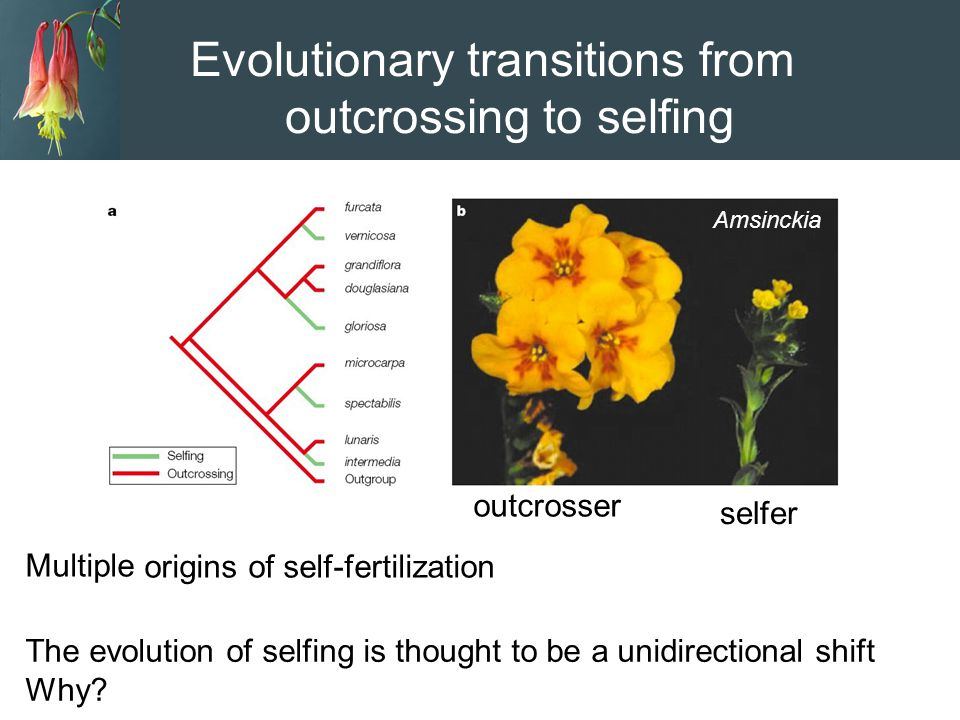 Evolutionary transitions from outcrossing to selfing
