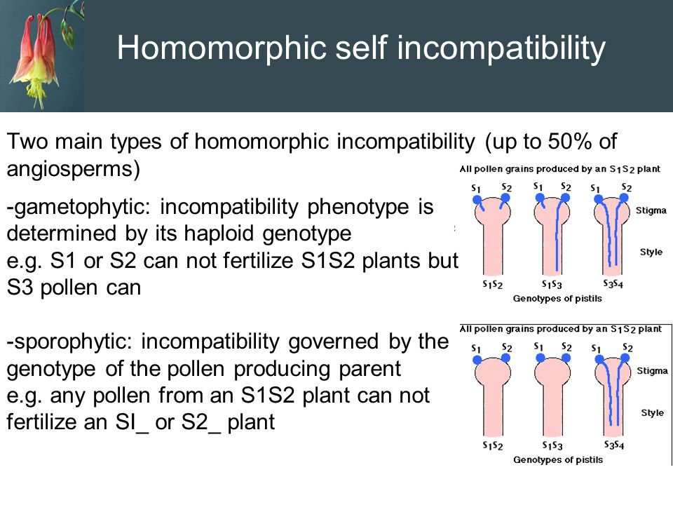 Homomorphic self incompatibility