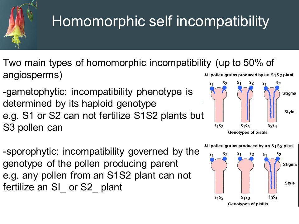 Homomorphic self incompatibility