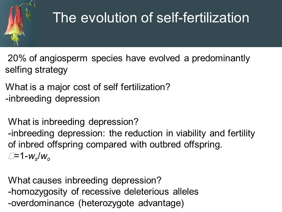 The evolution of self-fertilization