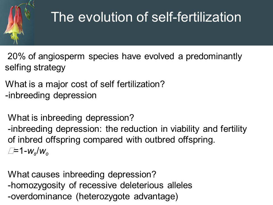 The evolution of self-fertilization