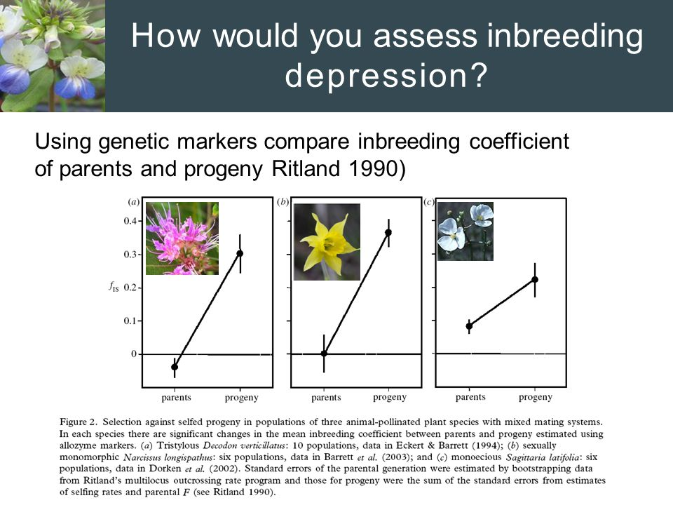 How would you assess inbreeding depression