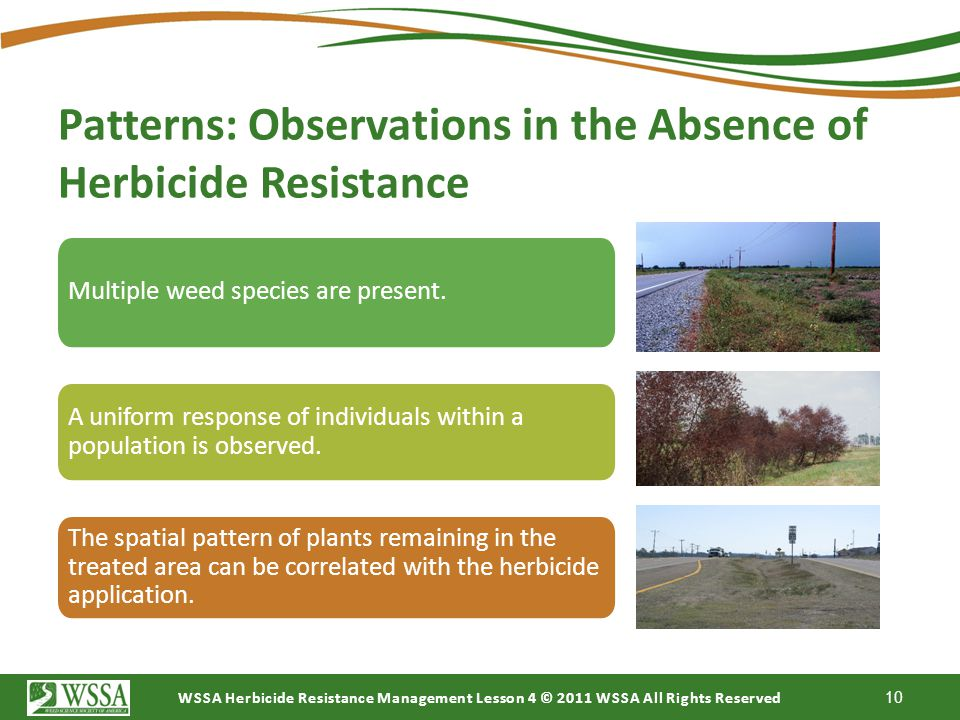 Patterns: Observations in the Absence of Herbicide Resistance