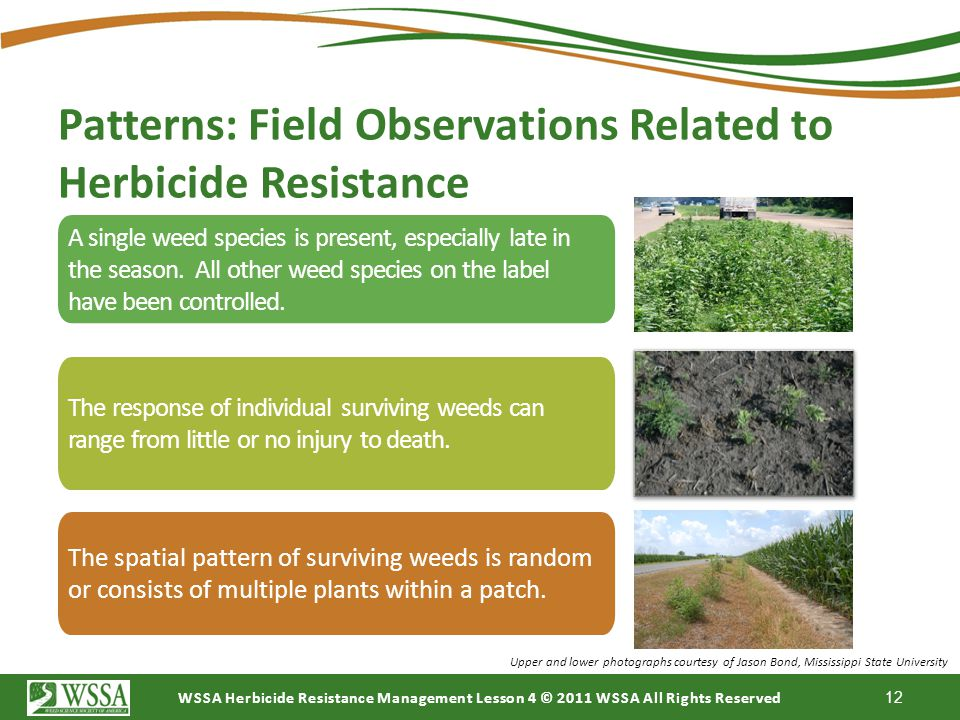 Patterns: Field Observations Related to Herbicide Resistance