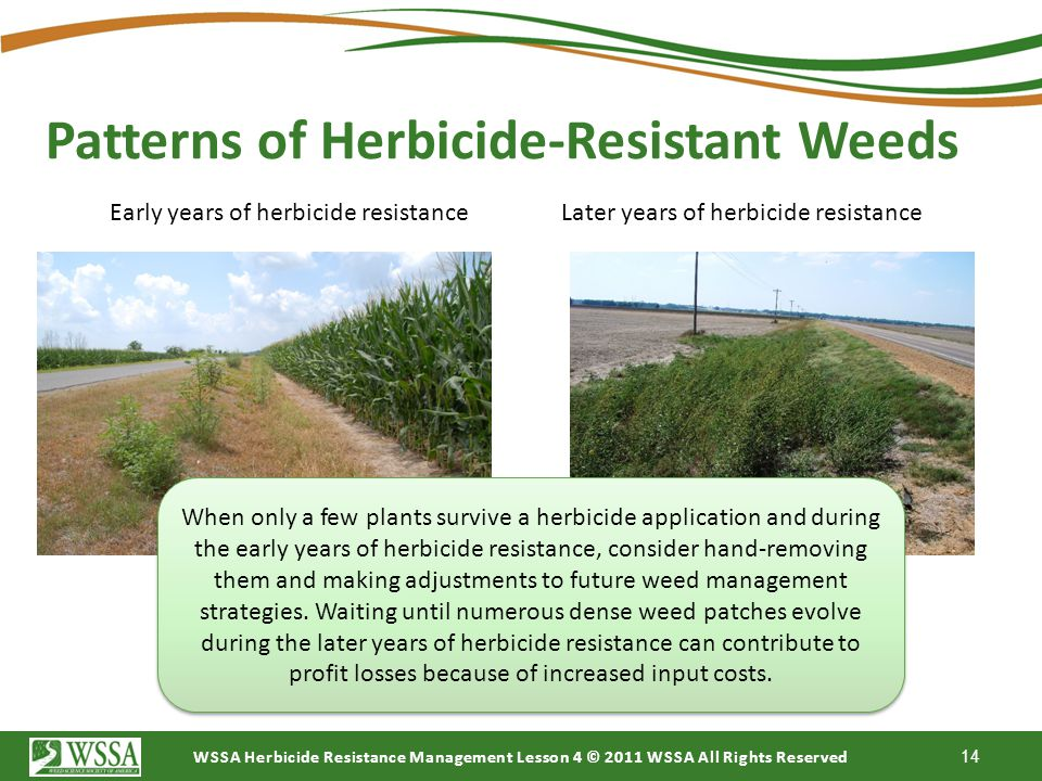 Patterns of Herbicide-Resistant Weeds