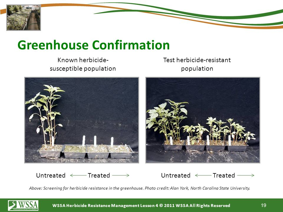 Greenhouse Confirmation