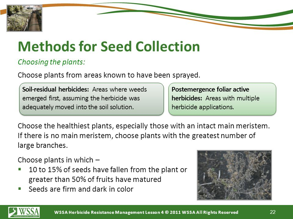 Methods for Seed Collection