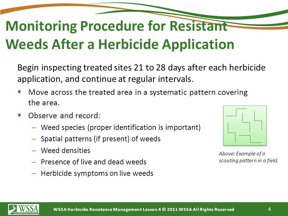 Monitoring Procedure for Resistant Weeds After a Herbicide Application
