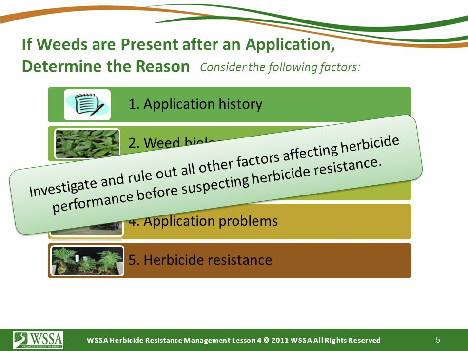 If Weeds are Present after an Application, Determine the Reason