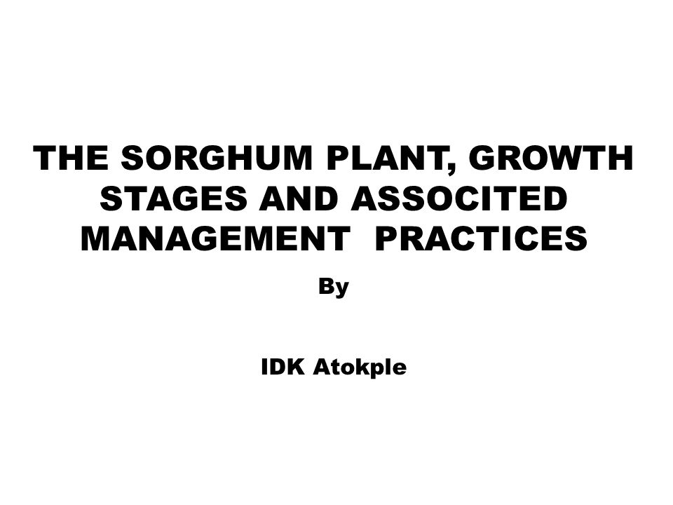THE SORGHUM PLANT, GROWTH STAGES AND ASSOCITED MANAGEMENT PRACTICES