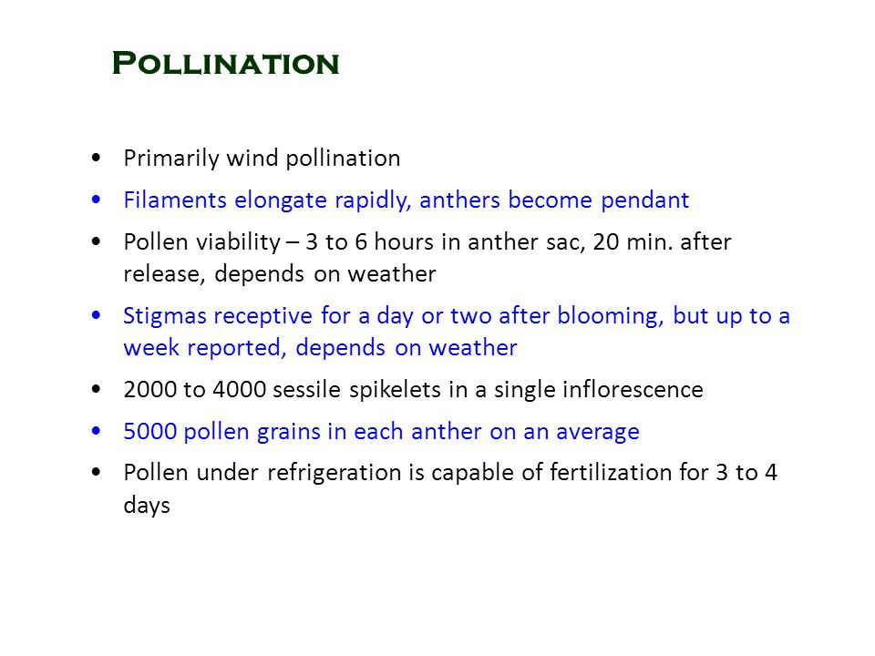 Pollination Primarily wind pollination