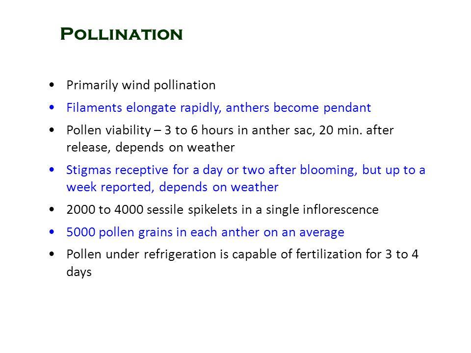 Pollination Primarily wind pollination
