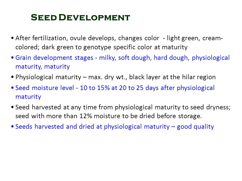 Seed Development After fertilization, ovule develops, changes color - light green, cream-colored; dark green to genotype specific color at maturity.