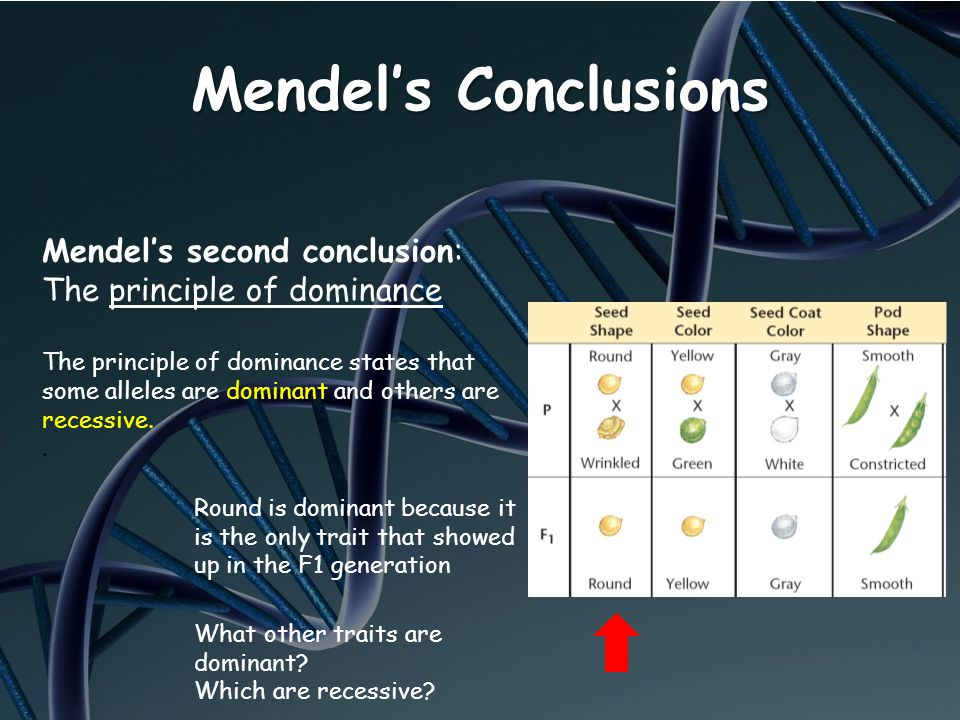 Mendel's Conclusions Mendel's second conclusion: