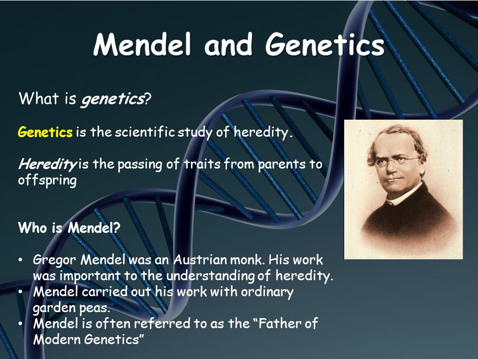 Mendel and Genetics What is genetics