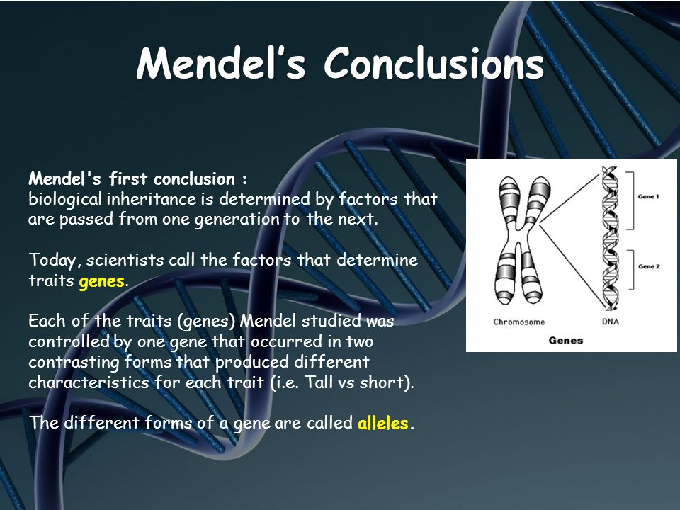Mendel's Conclusions Mendel s first conclusion :