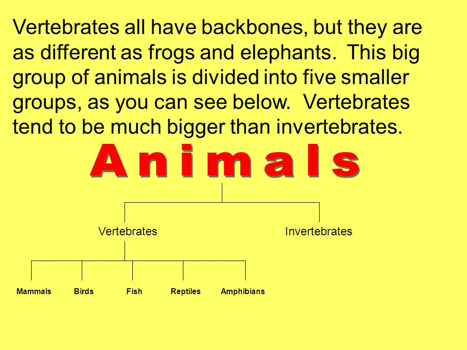 Vertebrates all have backbones, but they are as different as frogs and elephants. This big group of animals is divided into five smaller groups, as you can see below. Vertebrates tend to be much bigger than invertebrates.