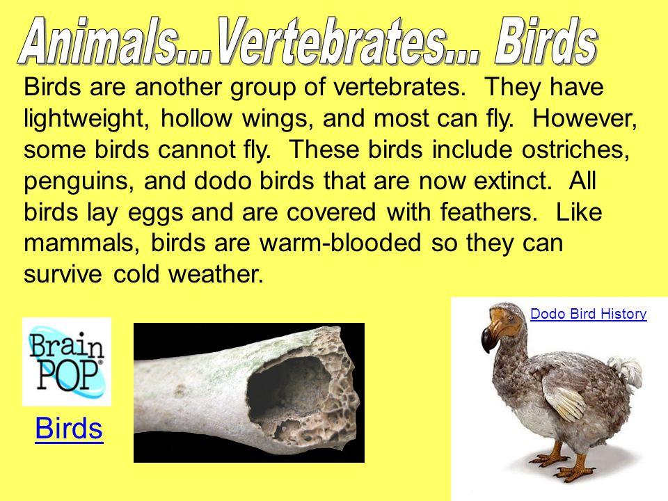 Animals...Vertebrates... Birds