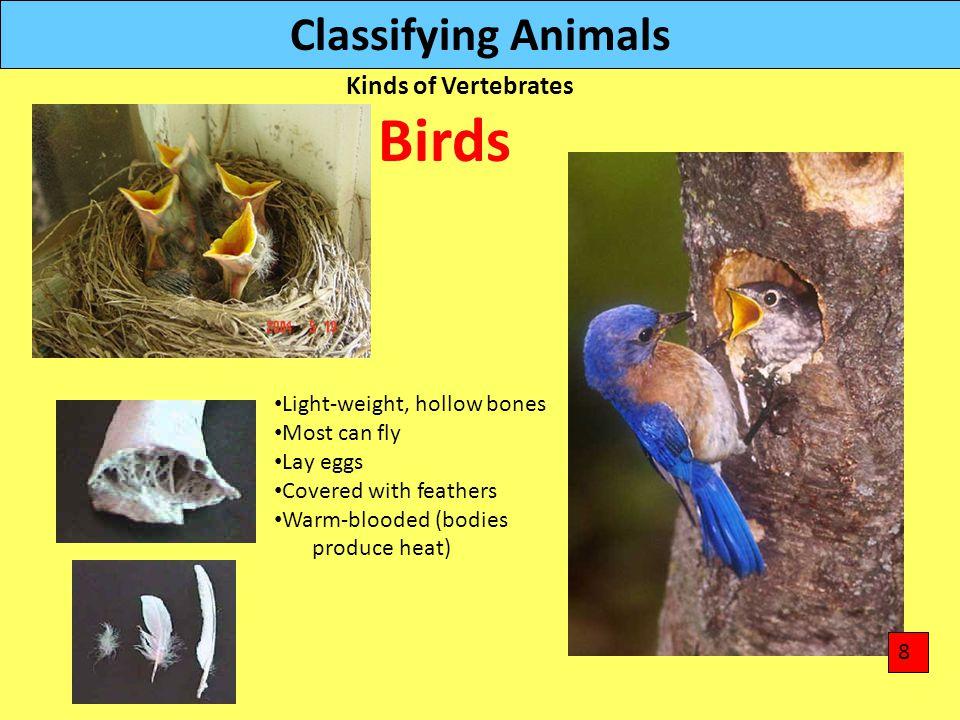 Birds Classifying Animals Kinds of Vertebrates