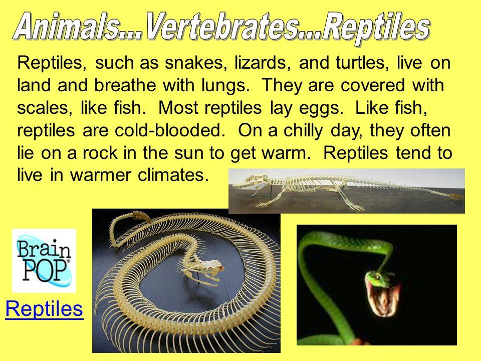 Animals...Vertebrates...Reptiles