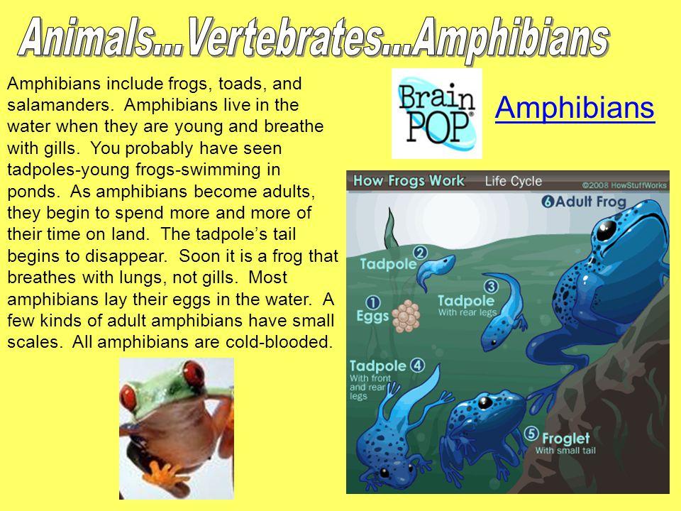 Animals...Vertebrates...Amphibians