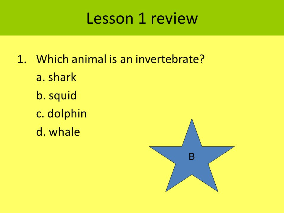 Lesson 1 review Which animal is an invertebrate a. shark b. squid