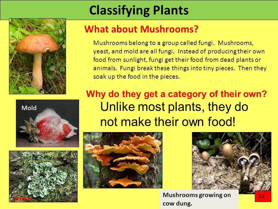 Classifying Plants What about Mushrooms