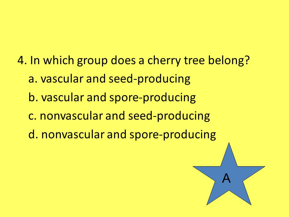 4. In which group does a cherry tree belong