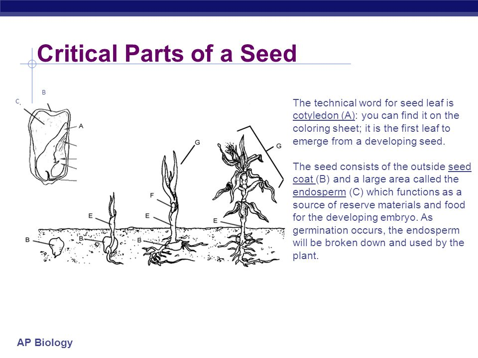 Critical Parts of a Seed