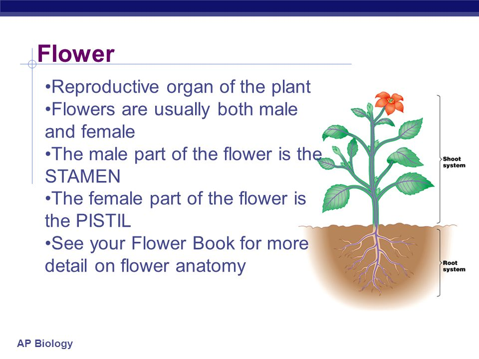 Flower Reproductive organ of the plant