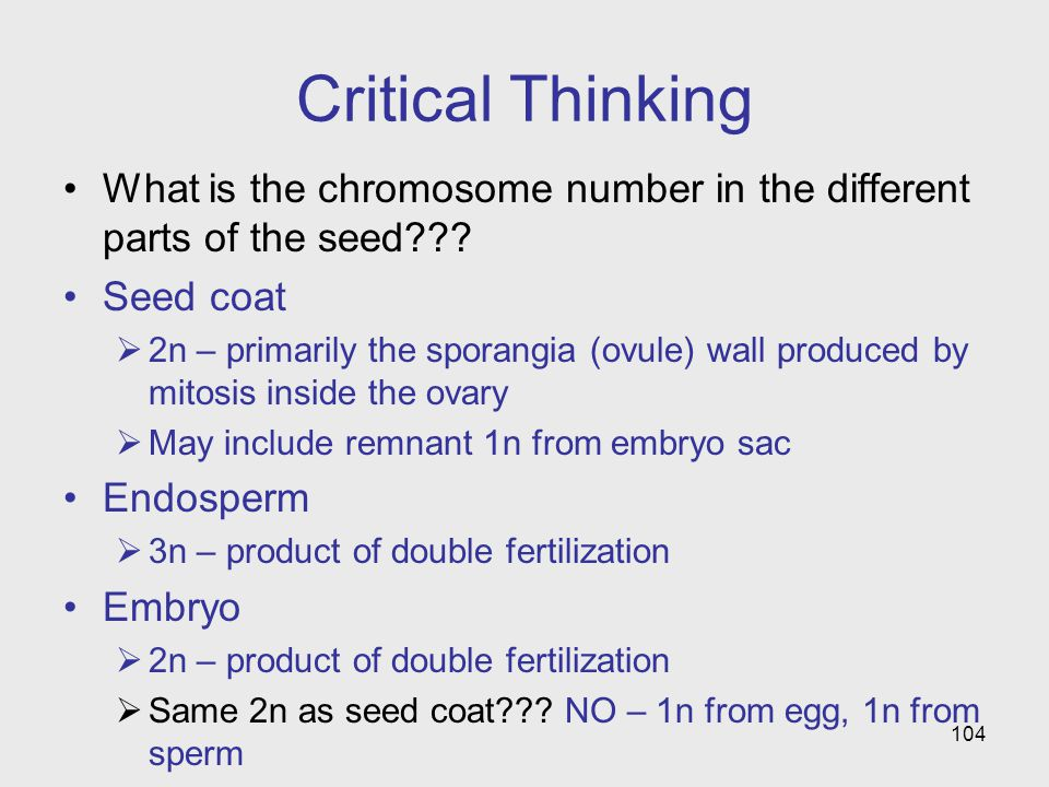 Critical Thinking What is the chromosome number in the different parts of the seed Seed coat.