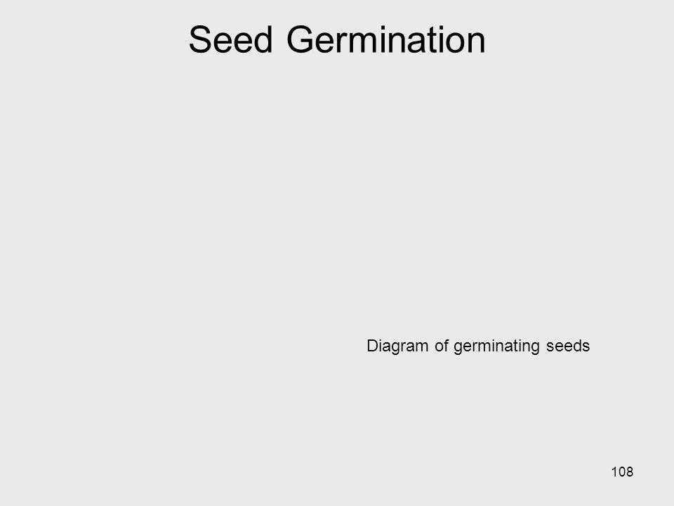 Seed Germination Diagram of germinating seeds