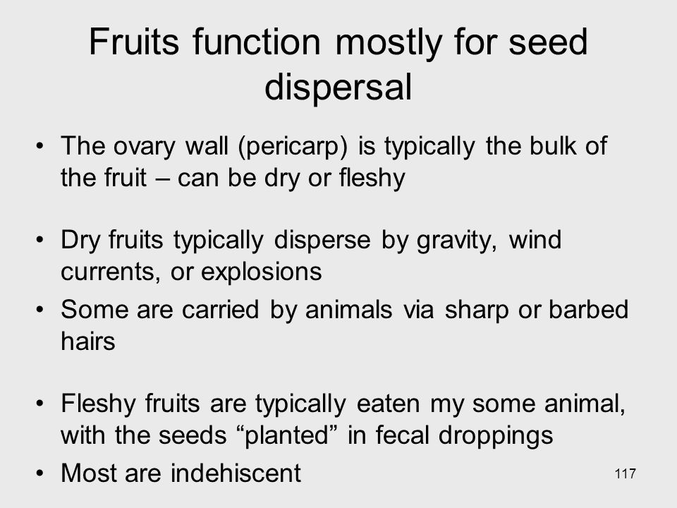 Fruits function mostly for seed dispersal