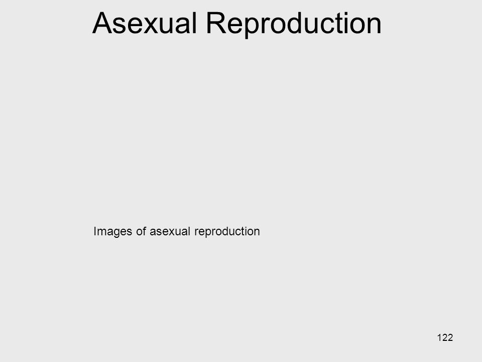 Asexual Reproduction Images of asexual reproduction