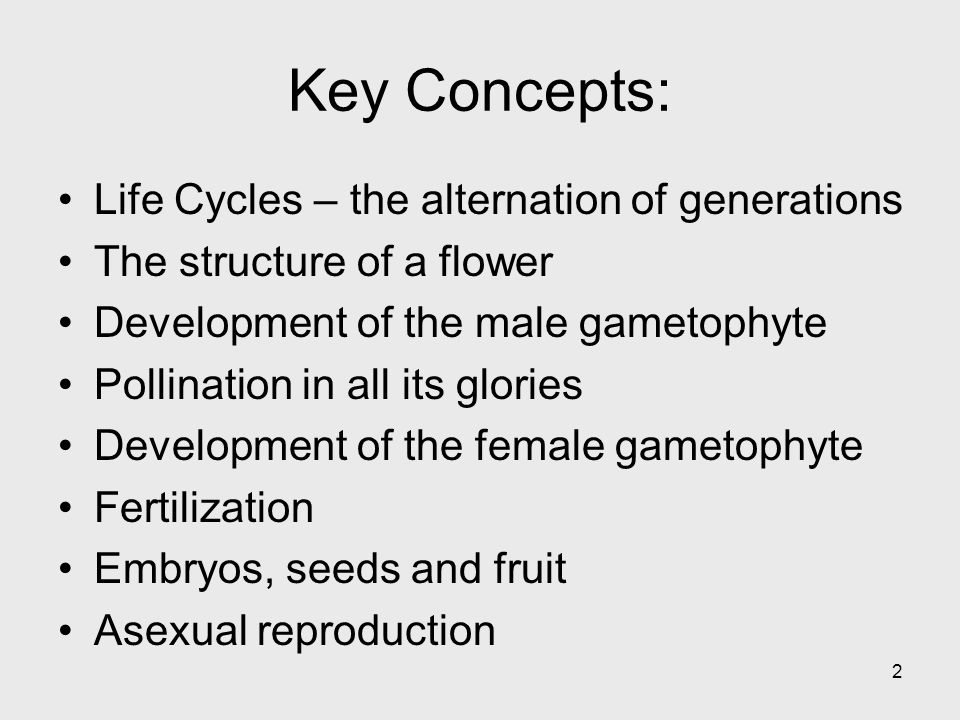 Key Concepts: Life Cycles – the alternation of generations