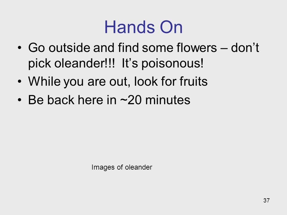 Hands On Go outside and find some flowers – don't pick oleander!!! It's poisonous! While you are out, look for fruits.
