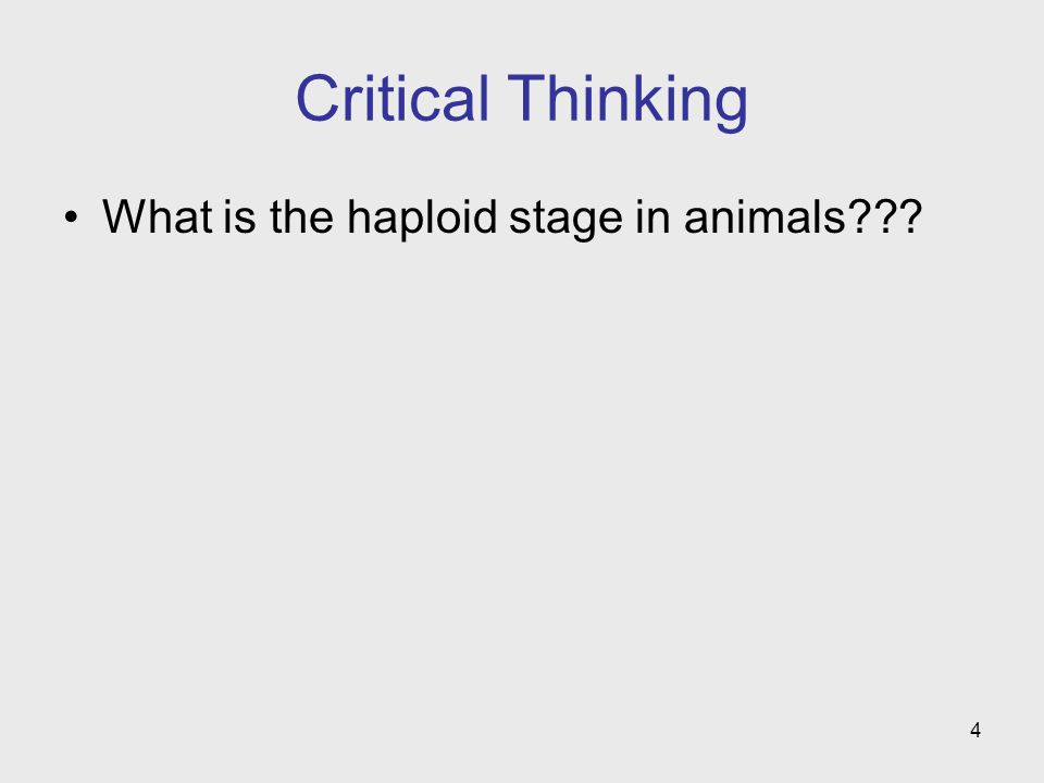 Critical Thinking What is the haploid stage in animals