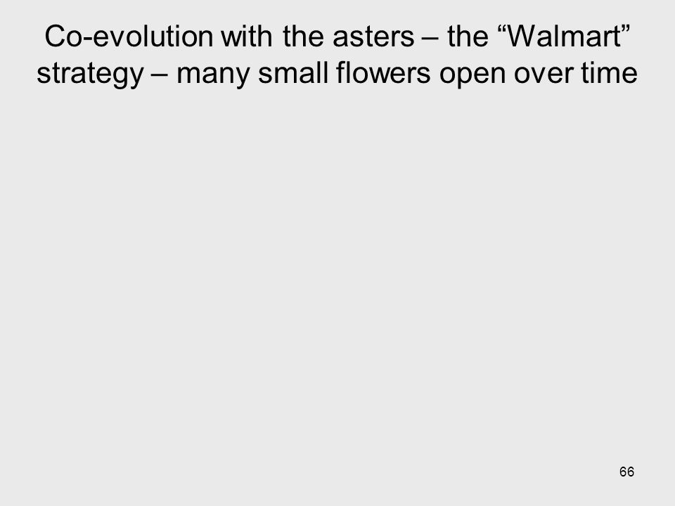 Co-evolution with the asters – the Walmart strategy – many small flowers open over time