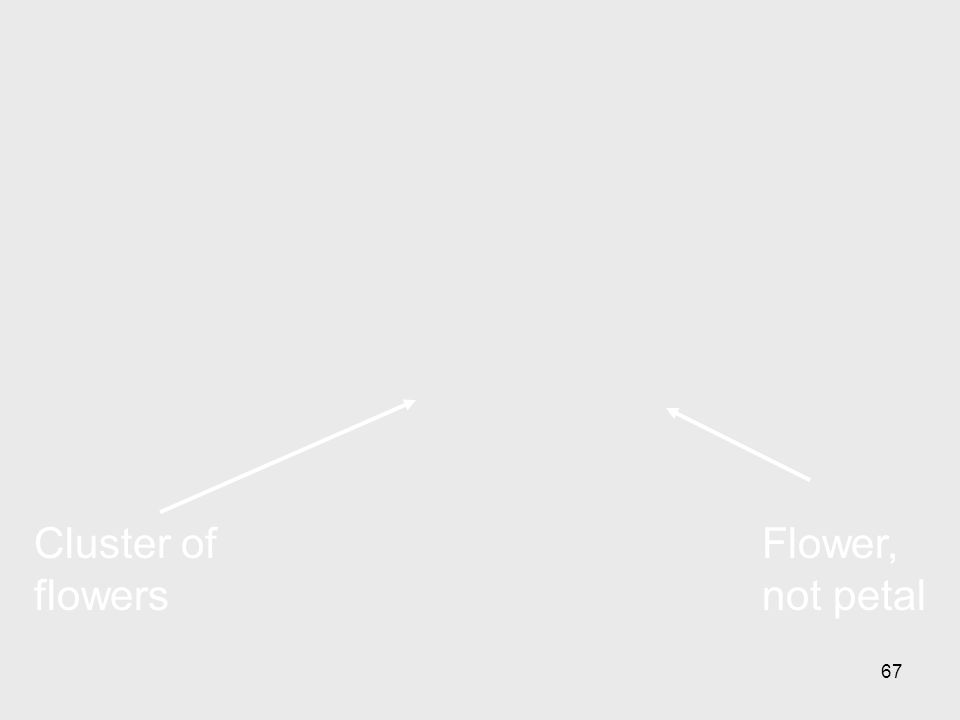 Cluster of flowers Flower, not petal