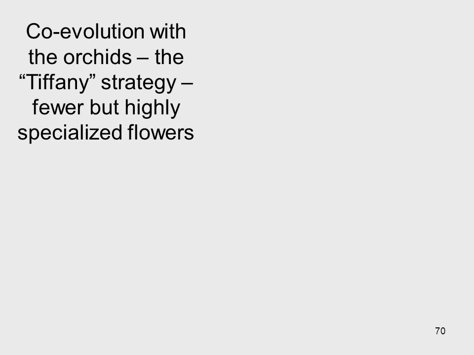 Co-evolution with the orchids – the Tiffany strategy – fewer but highly specialized flowers
