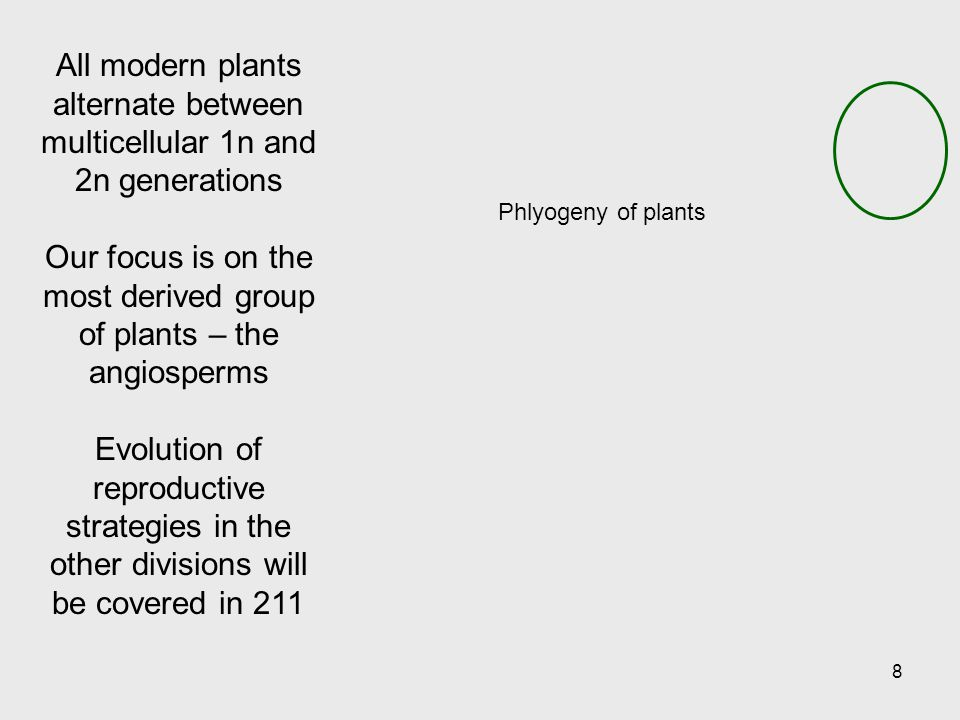 Our focus is on the most derived group of plants – the angiosperms