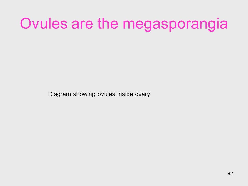 Ovules are the megasporangia