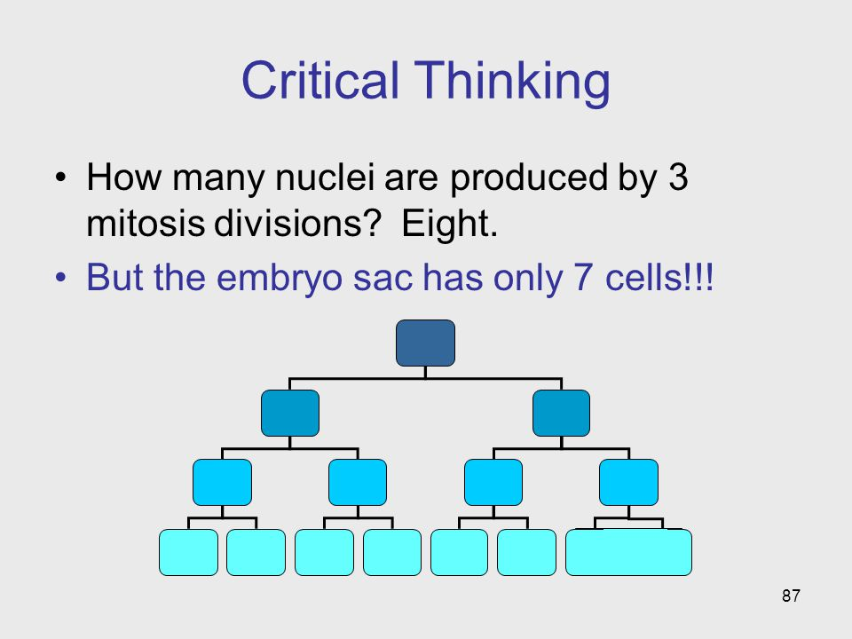 Critical Thinking How many nuclei are produced by 3 mitosis divisions.