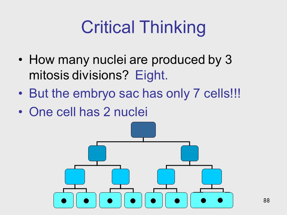 Critical Thinking How many nuclei are produced by 3 mitosis divisions Eight. But the embryo sac has only 7 cells!!!