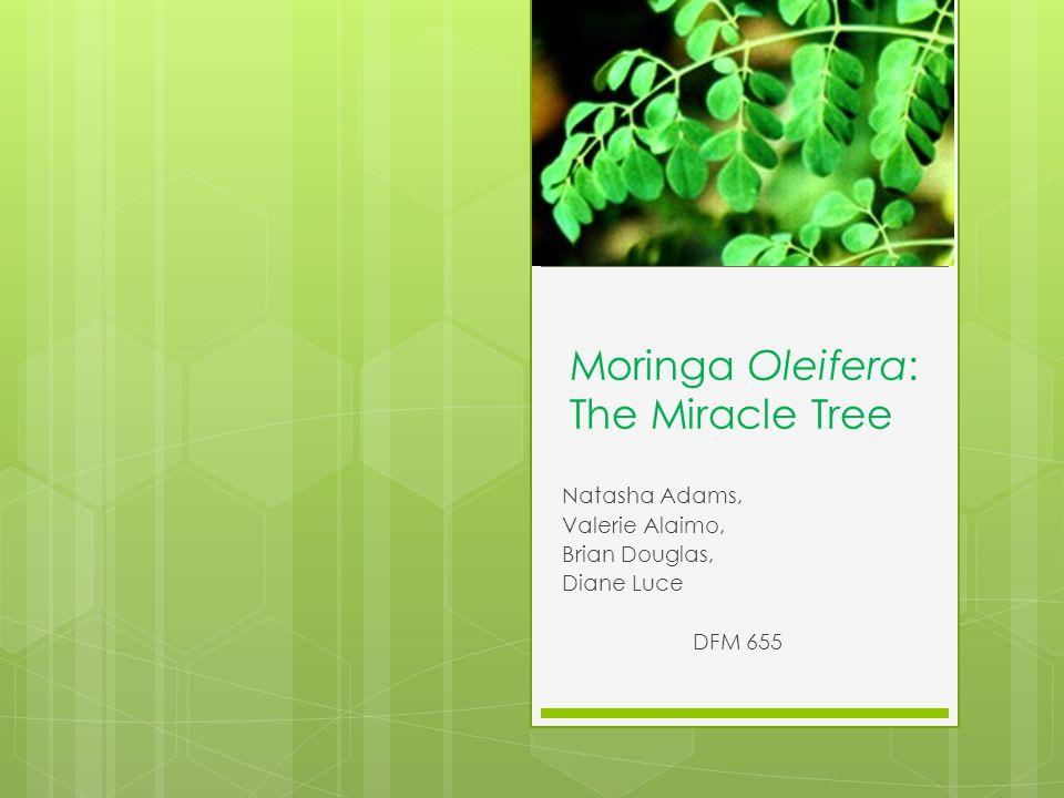 Moringa Oleifera: The Miracle Tree