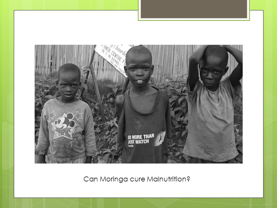 Can Moringa cure Malnutrition