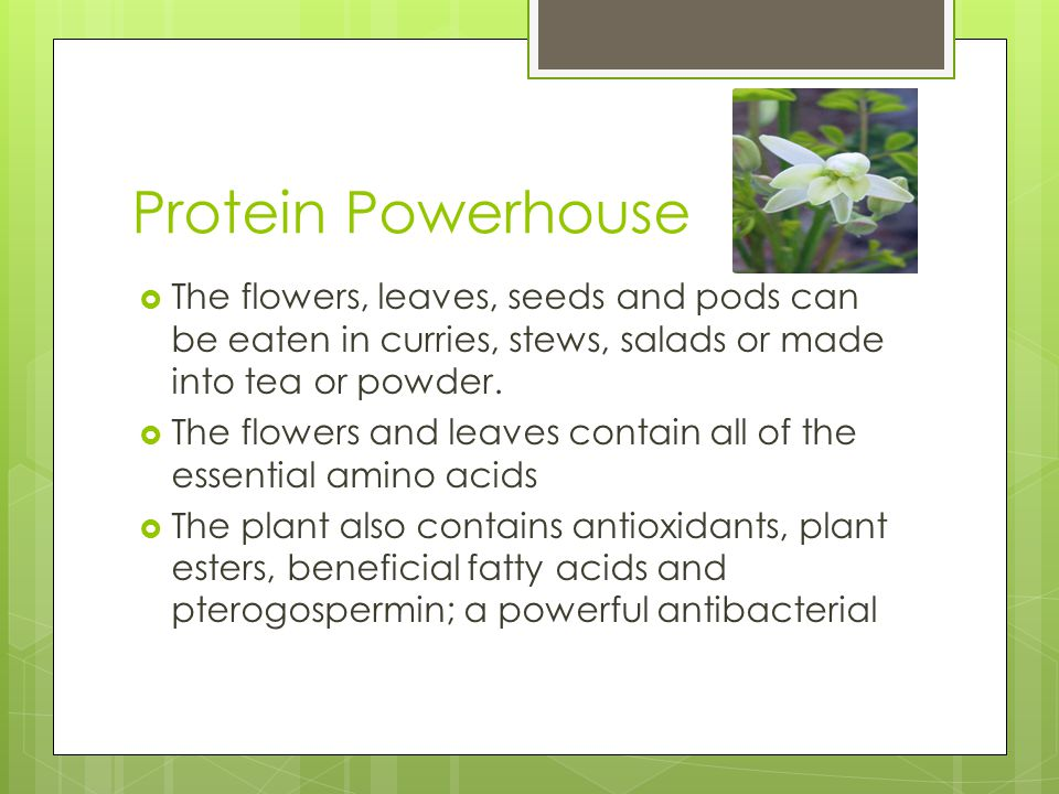 Protein Powerhouse The flowers, leaves, seeds and pods can be eaten in curries, stews, salads or made into tea or powder.