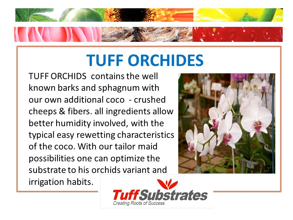 TUFF ORCHIDES