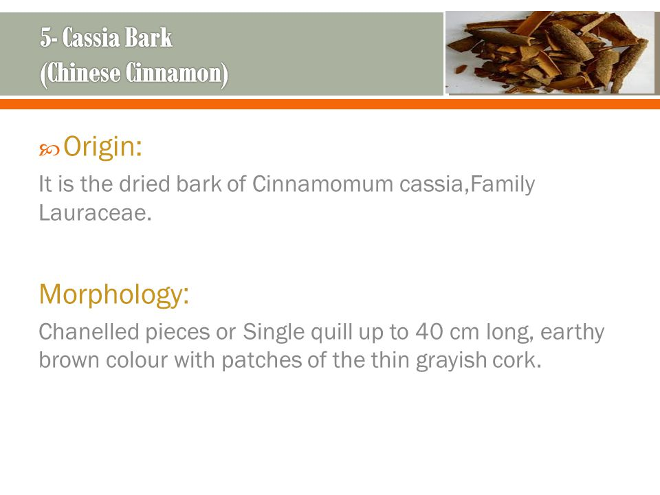 5- Cassia Bark (Chinese Cinnamon)